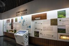 Exposição da tecnologia de produção do chá Imagens de Stock