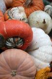 Exposição de abóboras sortidos Imagem de Stock Royalty Free