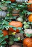 Exposição de abóboras sortidos Fotos de Stock Royalty Free