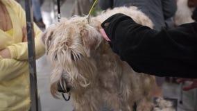 Exposição de cães internacional CACIB-FCI video estoque