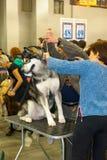 Exposição de cães internacional CACIB-FCI Imagem de Stock