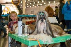 Exposição de cães internacional CACIB-FCI Fotos de Stock