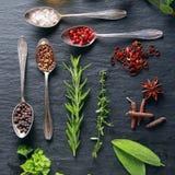 Exposição de ervas e de especiarias frescas Fotografia de Stock Royalty Free