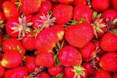 Exposição de morangos orgânicas frescas, alimento saudável do verão, fruto saboroso, Imagem de Stock