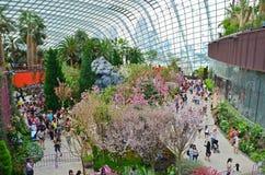 Exposição de Sakura em jardins pela baía Fotografia de Stock Royalty Free
