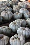 Exposição do remendo da abóbora - Grey Pumpkins Fotos de Stock Royalty Free