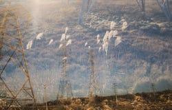 Exposição dobro de ervas do pilão e do campo Fotos de Stock Royalty Free