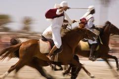 Exposição dos cavalos Imagens de Stock