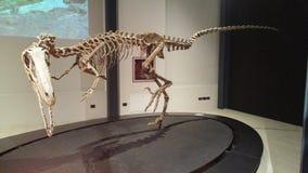 Exposição dos dinossauros Imagem de Stock Royalty Free
