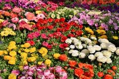 Exposição dos potenciômetros de flor fotografia de stock