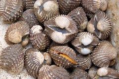 Exposição fresca dos moluscos dos berbigões do mar para a venda no mercado do marisco ou no alimento tailandês da rua foto de stock royalty free