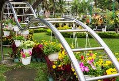 Exposição home das flores e das plantas Foto de Stock