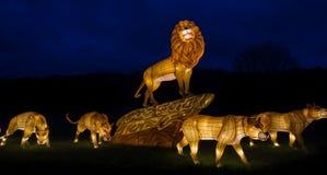 Exposição iluminada do leão fotografia de stock