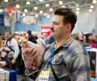 Exposição internacional dos gatos Fotografia de Stock Royalty Free