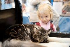 Exposição internacional dos gatos Foto de Stock
