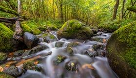 Exposição longa de fluxo da água na floresta fotos de stock royalty free