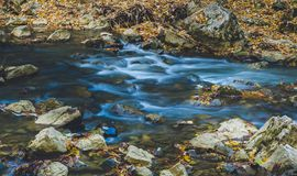Exposição longa do rio bonito das árvores de floresta do outono Imagem de Stock