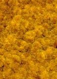 Exposição múltipla dos Marigolds imagens de stock royalty free