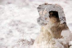 Exposição repetida dos cães Fotos de Stock Royalty Free