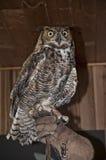Exposição salvada da coruja no parque estadual North Carolina EUA da rocha da chaminé foto de stock royalty free