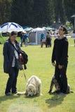 Exposición canina Fotos de archivo