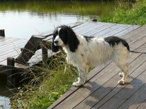 Exposición canina ¼ del ¾ Ð del 'Ð de Ð?Ñ de е ² кР Ñ ¾ Ð ¼ Ð ² РД Imagen de archivo libre de regalías