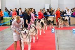 Exposición canina internacional CACIB-FCI Fotografía de archivo