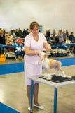 Exposición canina internacional CACIB-FCI Imágenes de archivo libres de regalías