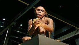Exposición de la prehistoria Fotografía de archivo libre de regalías