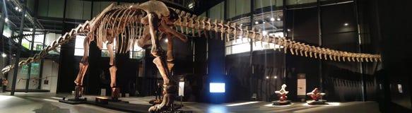 Exposición de los dinosaurios Foto de archivo libre de regalías