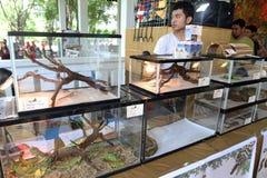 Exposición de los reptiles Imágenes de archivo libres de regalías