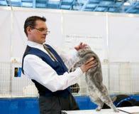 Exposición del gato Fotos de archivo