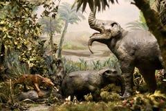 Exposición del museo de la historia natural Imagen de archivo libre de regalías
