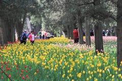 Exposición del tulipán Imagen de archivo