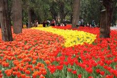 Exposición del tulipán Foto de archivo libre de regalías