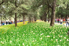 Exposición del tulipán Fotos de archivo
