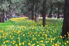 Exposición del tulipán Fotos de archivo libres de regalías