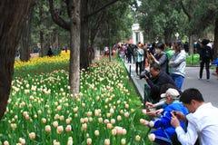 Exposición del tulipán Imagen de archivo libre de regalías