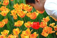 Exposición del tulipán Foto de archivo