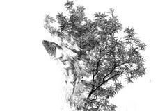 Exposición doble de un hombre en una capilla Exposición doble de un individuo entre las hojas Ejemplo creativo del arte de un var imagenes de archivo