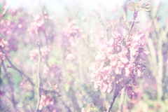 Exposición doble del árbol de las flores de cerezo de la primavera abstraiga el fondo Concepto soñador Imágenes de archivo libres de regalías