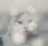 Exposición doble del gato stock de ilustración