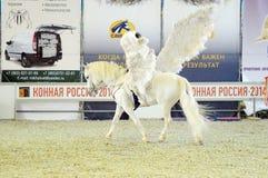 Exposición internacional del caballo de Pegaso Imagen de archivo libre de regalías