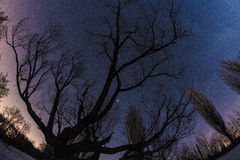 Exposición larga de las estrellas Imagen de archivo