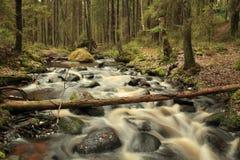 Exposición larga que fluye de la corriente del bosque Foto de archivo