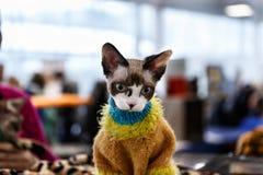 Exposición linda del animal de los gatos Fotos de archivo