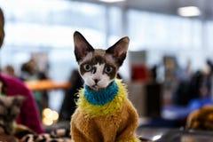 Exposición linda del animal de los gatos Imagen de archivo libre de regalías
