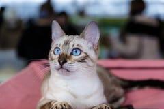 Exposición linda del animal de los gatos Imagenes de archivo