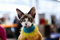 Exposición linda del animal de los gatos Fotografía de archivo