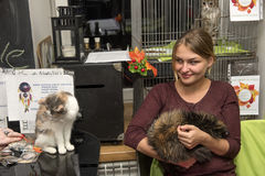 Exposición y distribución de gatos de un refugio Fotografía de archivo